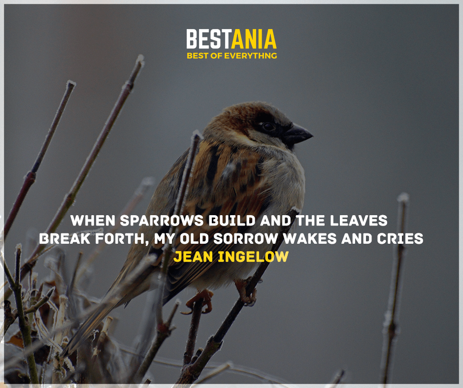 """""""When sparrows build and the leaves break forth, My old sorrow wakes and cries."""" Jean Ingelow"""