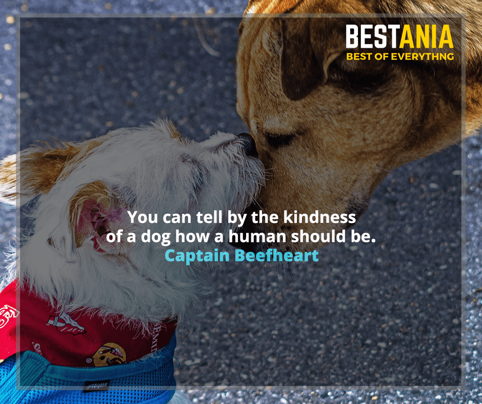 You can tell by the kindness of a dog how a human should be. Captain Beefheart