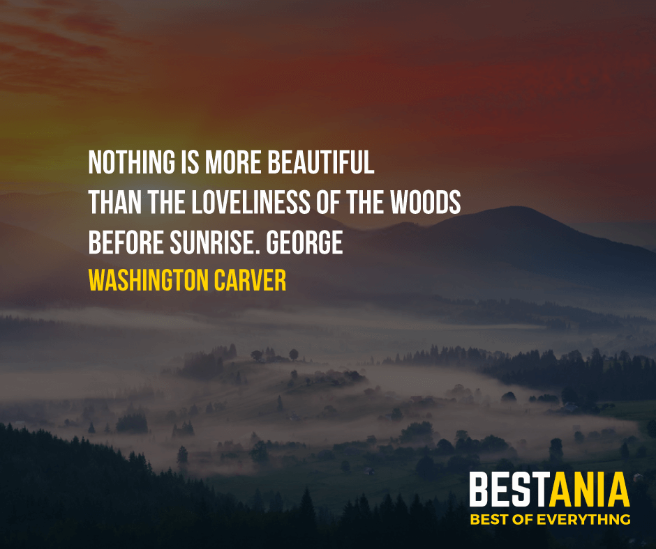 """NOTHING IS MORE BEAUTIFUL THAN THE LOVELINESS OF THE WOODS BEFORE SUNRISE.""  GEORGE WASHINGTON CARVER"