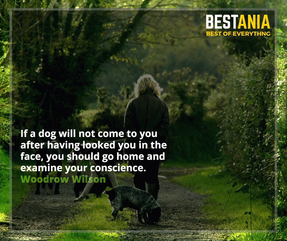 If a dog will not come to you after having looked you in the face, you should go home and examine your conscience. Woodrow Wilson