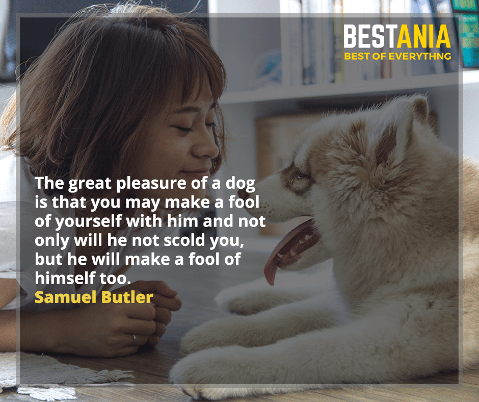 The great pleasure of a dog is that you may make a fool of yourself with him and not only will he not scold you, but he will make a fool of himself too. Samuel Butler