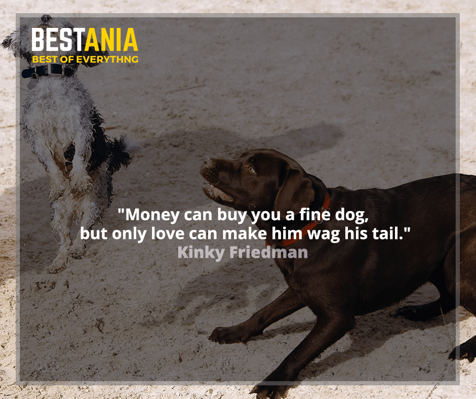 """Money can buy you a fine dog, but only love can make him wag his tail.""  Kinky Friedman"
