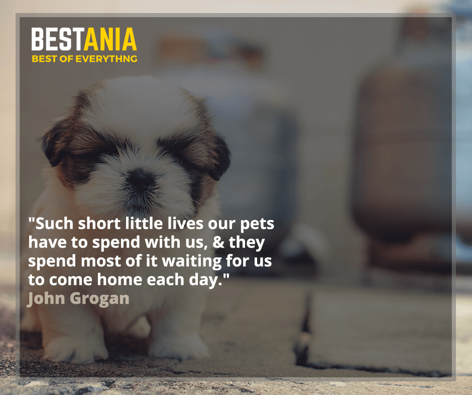 """Such short little lives our pets have to spend with us, & they spend most of it waiting for us to come home each day."" - John Grogan"