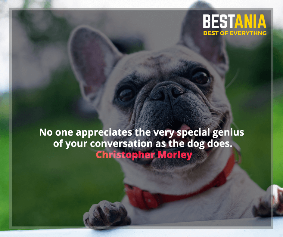 No one appreciates the very special genius of your conversation as the dog does. Christopher Morley