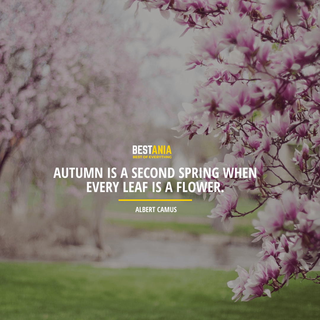 """AUTUMN IS A SECOND SPRING WHEN EVERY LEAF IS A FLOWER."" ALBERT CAMUS"