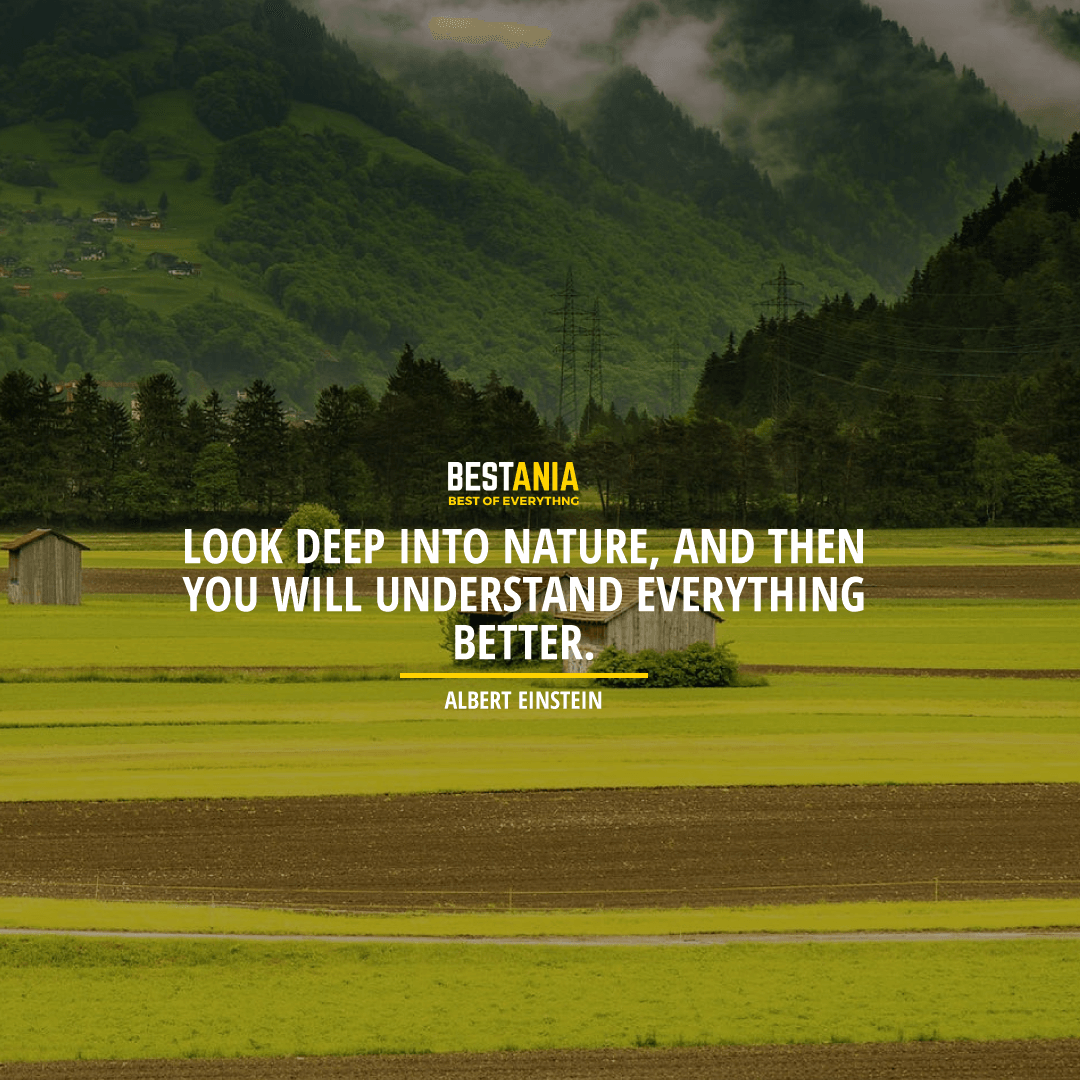 """LOOK DEEP INTO NATURE, AND THEN YOU WILL UNDERSTAND EVERYTHING BETTER."" ALBERT EINSTEIN"