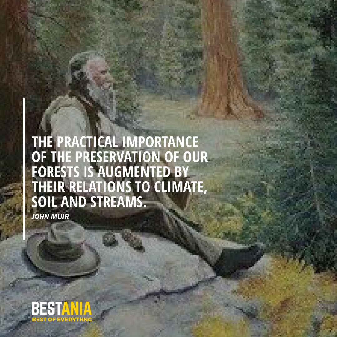 """""""THE PRACTICAL IMPORTANCE OF THE PRESERVATION OF OUR FORESTS IS AUGMENTED BY THEIR RELATIONS TO CLIMATE, SOI, AND STREAMS."""" JOHN MUIR"""