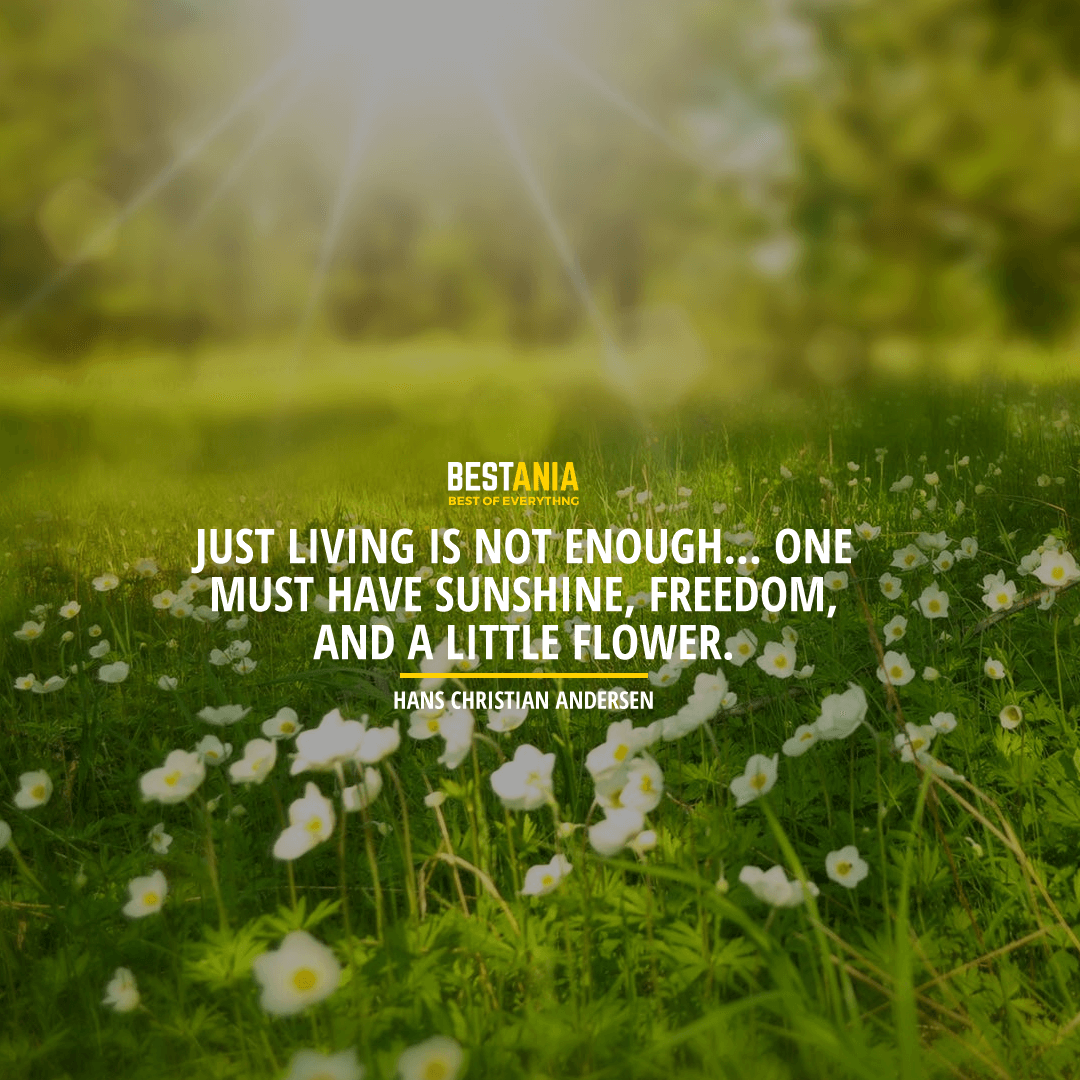 """JUST LIVING IS NOT ENOUGH... ONE MUST HAVE SUNSHINE, FREEDOM, AND A LITTLE FLOWER."" HANS CHRISTIAN ANDERSEN"