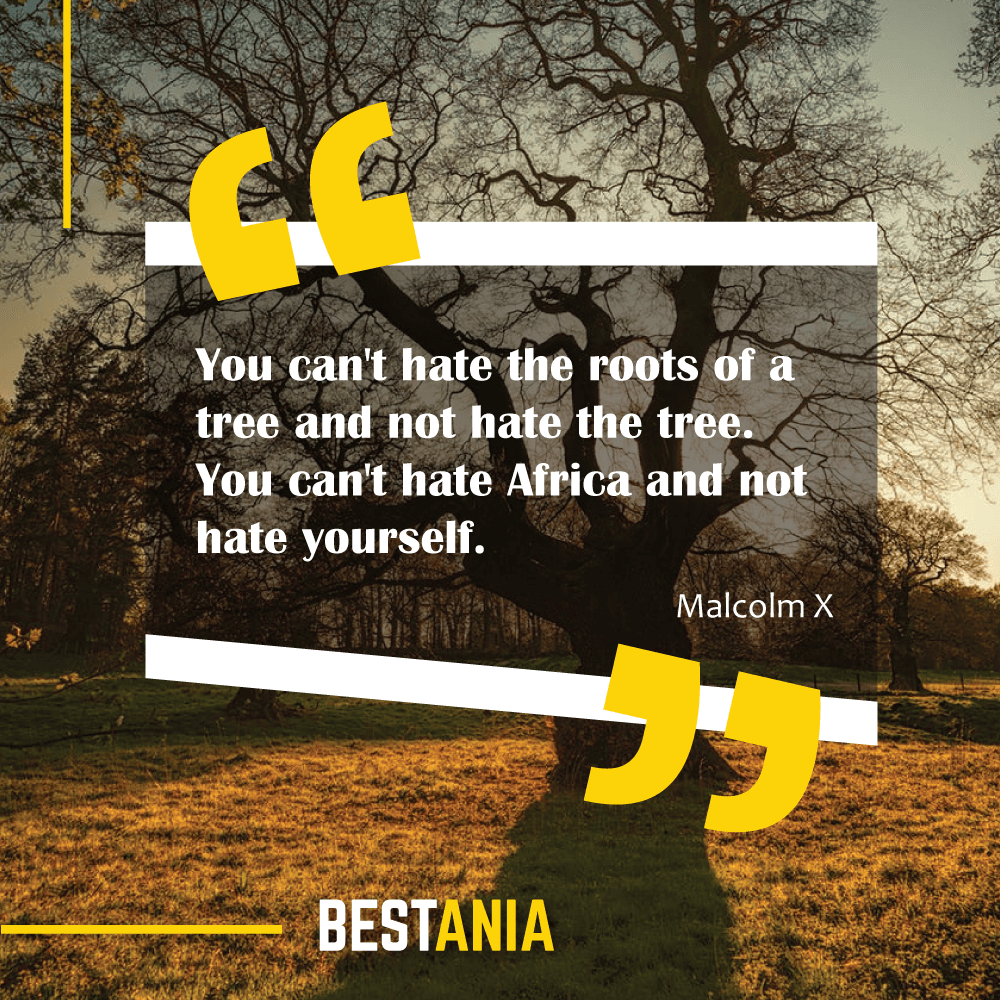 You can't hate the roots of a tree and not hate the tree. You can't hate Africa and not hate yourself. Malcolm X
